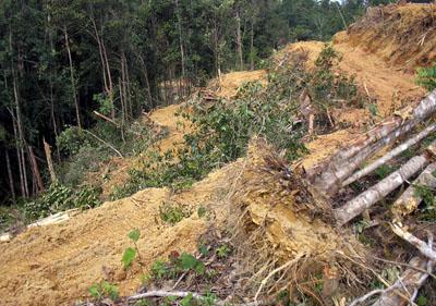Penggundulan hutan yang tidak memperhatikan lingkungan