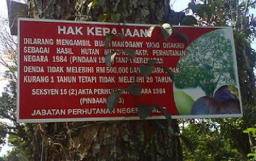 Papan larangan untuk tidak memetik buah mahoni di Malaysia.
