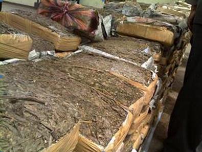 Barang bukti daun ganja seberat 1 ton