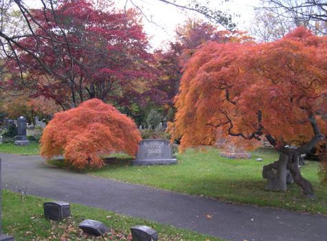 Makam yang indah dengan pepohonan besar di Moravian, AS.