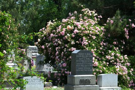 Makam yang semarak dengan bunga mawar di The Sacramento Old City Cemetery.