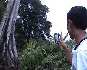 Pengunjung mengabadikan pohon tumbang yang dapat tegak kembali.