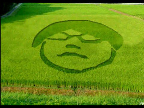 Profil Gayus jadi motif crop circle (dijamin asli hoax nih)