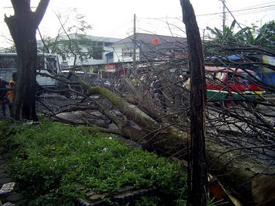 Pemangkasan pohon pelindung di Bandung.