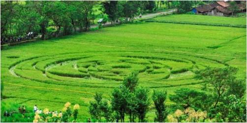 Crop circle di Sleman 2011.