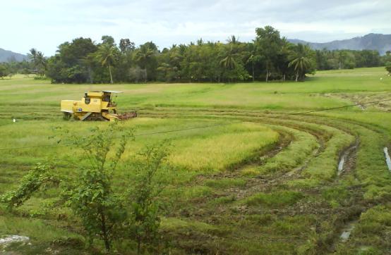 Inilah sosok kuning yang sedang membuat circle crop.