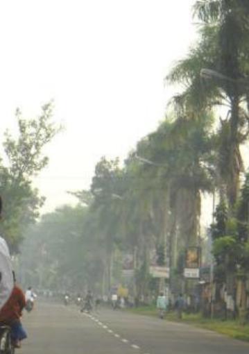 Deretan palem di ruas jalan desa Blater, Purbalingga.