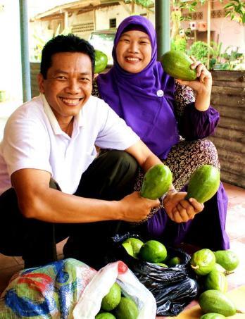 Panen buah apokat di rumah Blater Purbalingga.