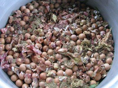 Proses pembuatan telur pindang.