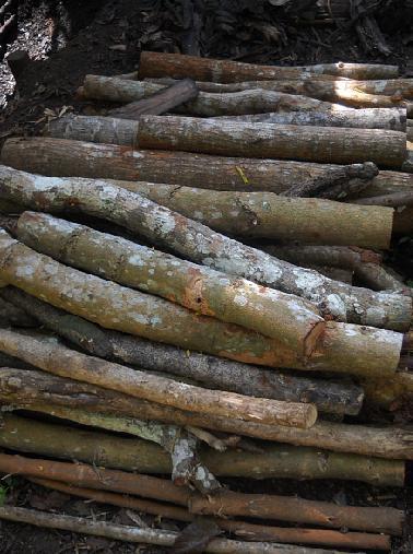Proses pembuatan arang 1 : Tumpukan kayu untuk dibuat arang.