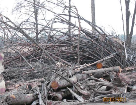 Sisa-sisa pohon yang habis terbakar kena awan panas Merapi.
