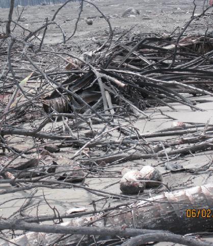 Sisa-ssa ranting dan kayu yang bisa dimanfaatkan untuk bahan baku arang.