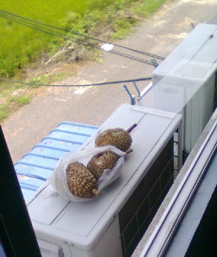 Durian disembunyikan di luar jendela.