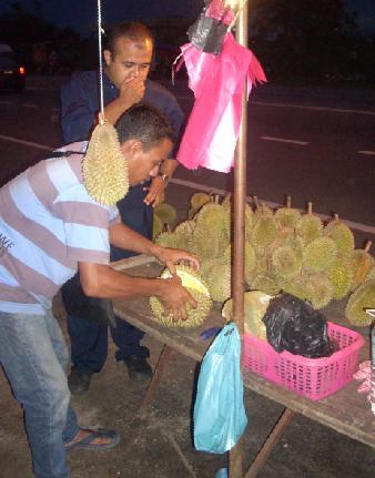 Memilih buah durian.