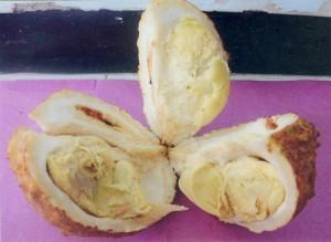 Isi buah persis durian biasa.