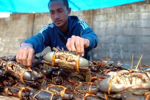 Silakan yang mau beli kepiting.... dipilih...dipilih....