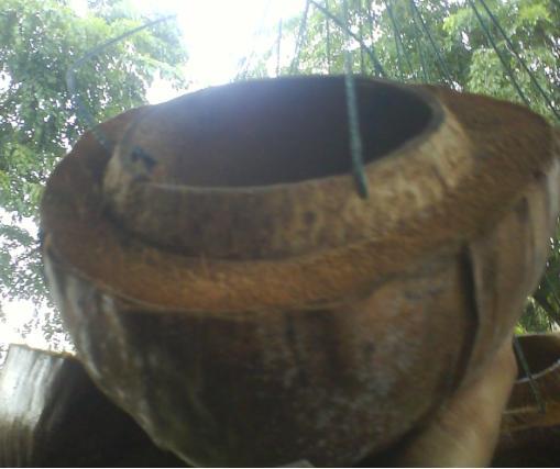 Contoh lain pot gantung dari buah kelapa.