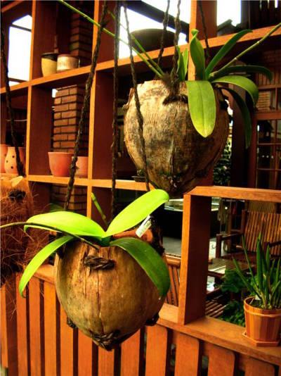 Tanaman hias jenis anggrek atau tanaman rambat dapat dipilih untuk pot ini.
