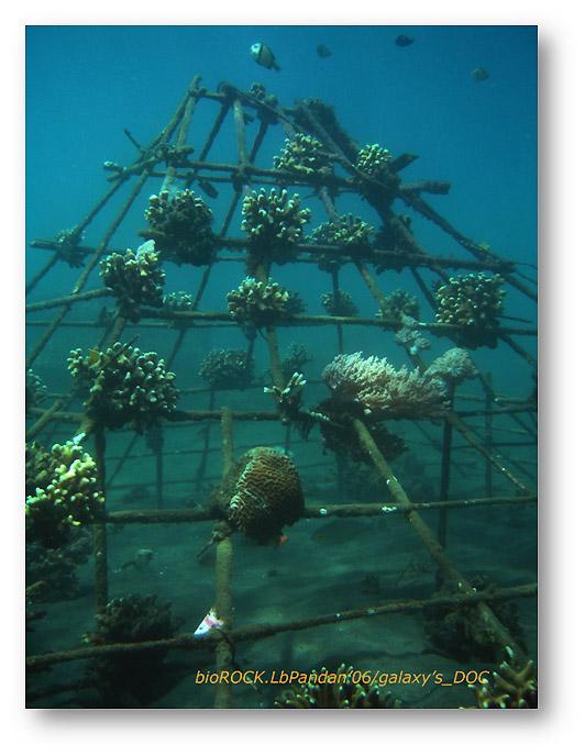 Rumpon buatan yang ada di dasar laut.