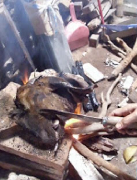 2. Bulu yang terbakar dikerok dengan pisau.