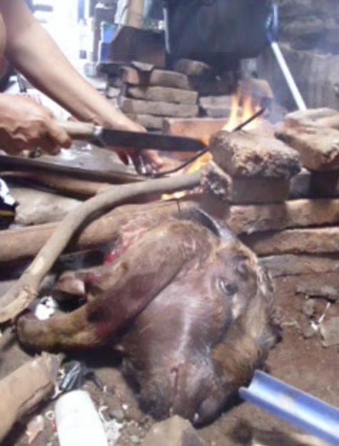1. Kaki dan kepala kambing dibakar sampai bulunya habis.