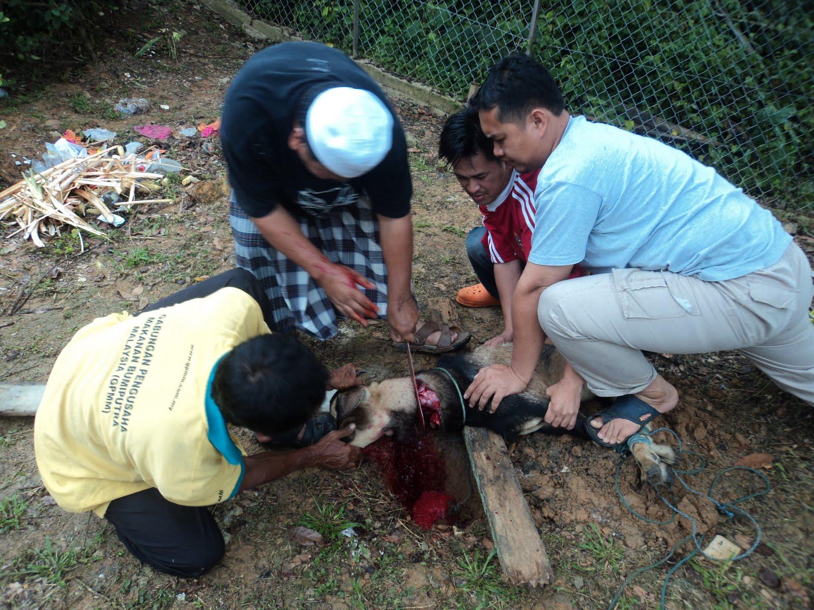 Posisi Kaki Sang Penyembelih Hewan Kurban New Iqmal Tahirs Blog